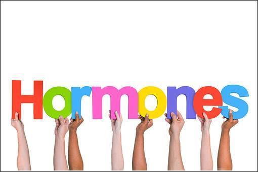 صورة أطعمة مهمة لتنظيم الهرمونات لدى المرأة